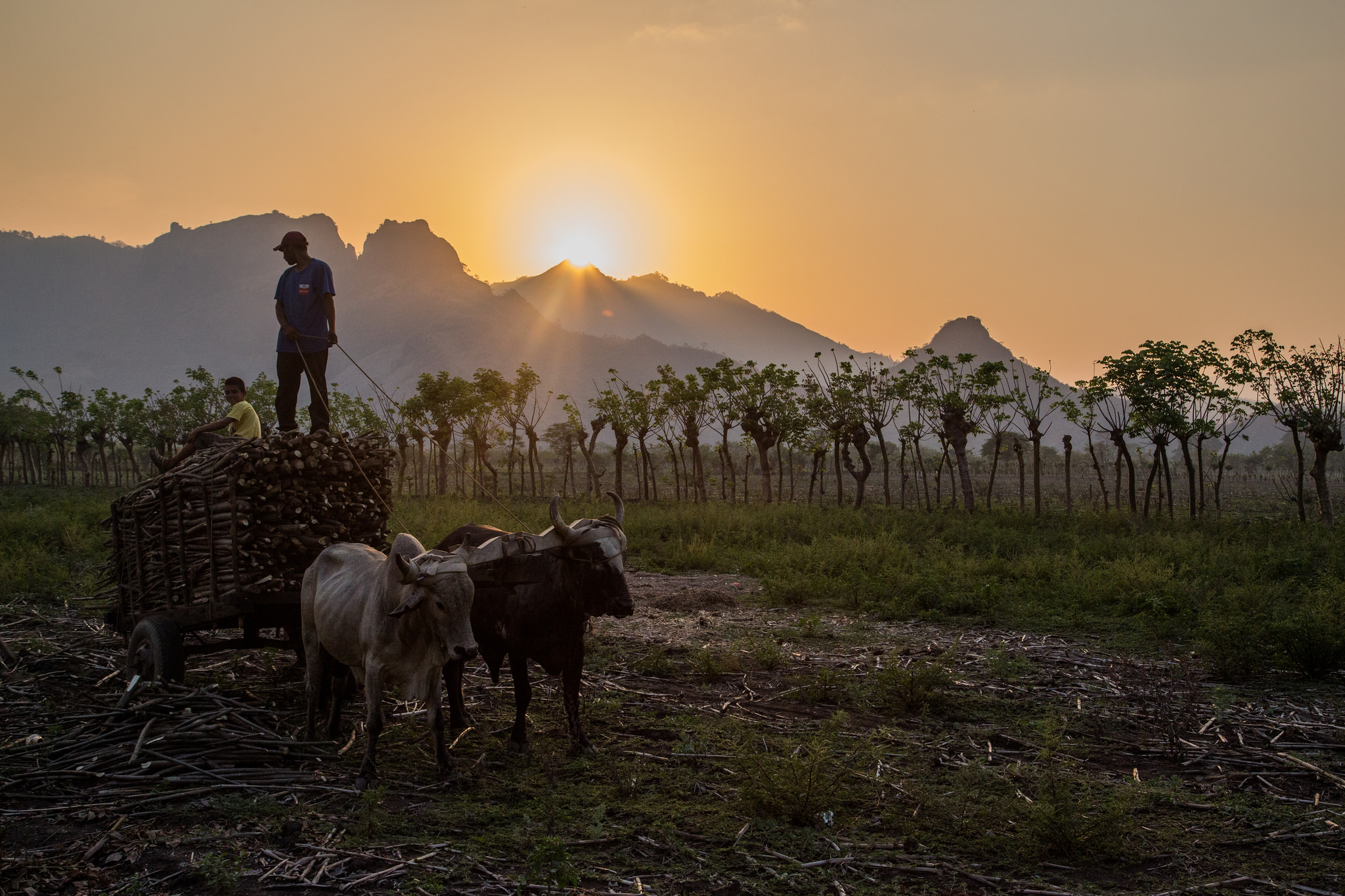 The sun sets over a set of jagged peaks in the distance. In the medium distance are a row of palm trees. In the foreground is a farmers standing on top of a cart pulled by two oxen.