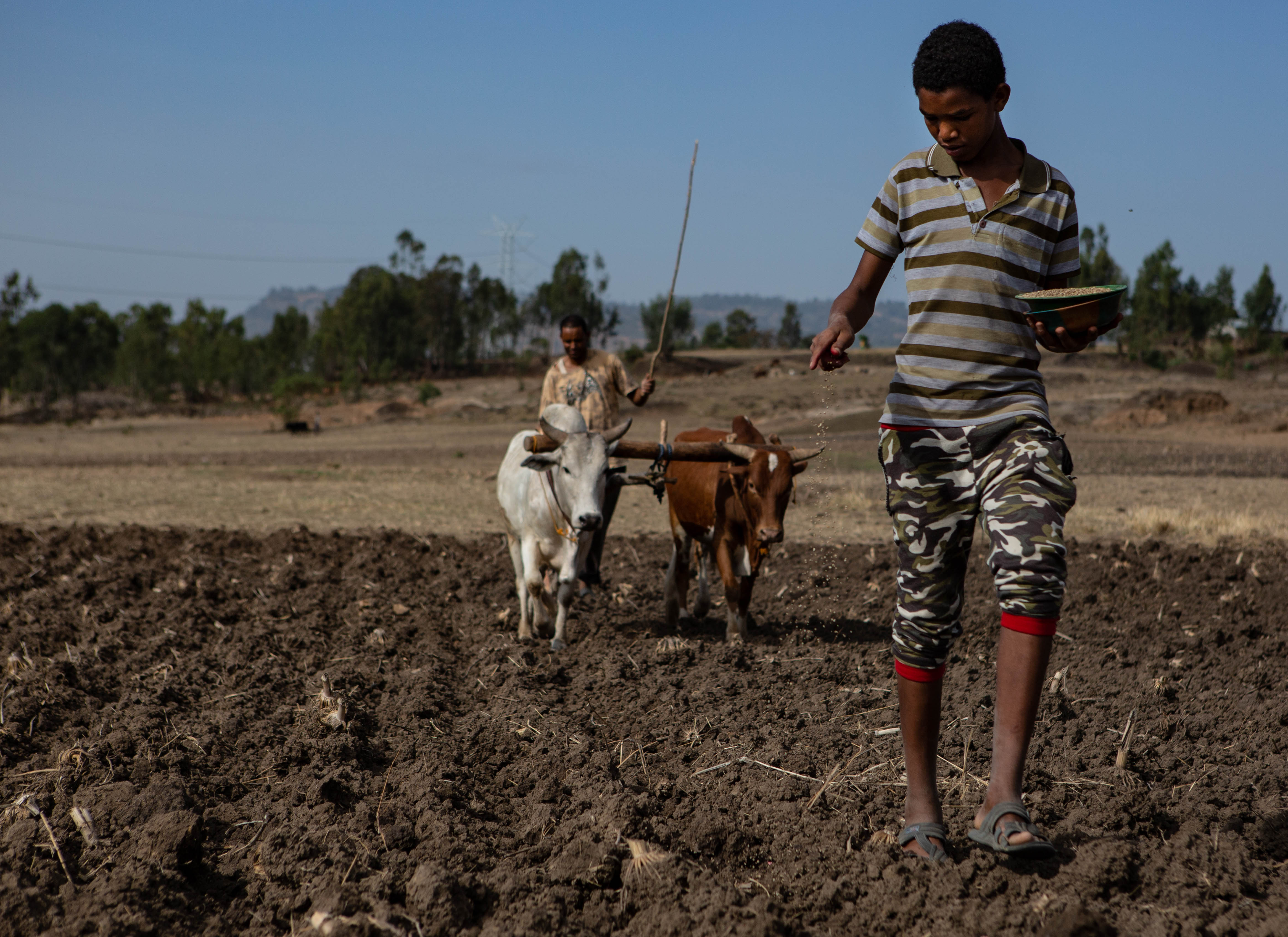 A young Ethiopian manin a striped colored shirt, camouflage-patterned capris, and black sandals walks towards the camera while dropping maize seeds into the churned soil before the plow. Another man follows in the background, driving a two-oxen plow. The landscape beyond the field looks dry and brown.  Photographer Jacquelyn Turner, ACToday/IRI.